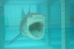 Snark Shark! Hungry for a bite.